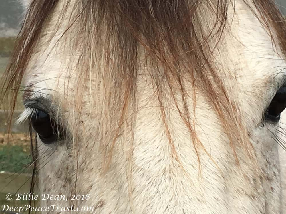 brumby eyes with watermark