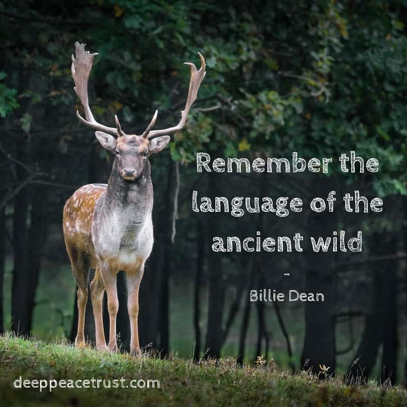 remember-the-language-of-the-ancient-wild-1